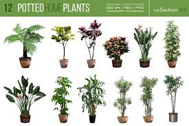 Home Plants 12 Potted Home Plants Vol 3 Objects Creative Market