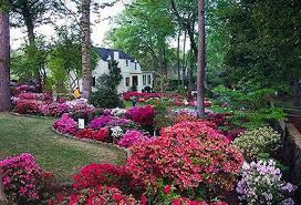 Landscaping Tyler Tx by Tyler Texas Community Information Resource Center