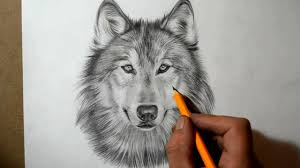 wolf face best yin yang wolf face tattoo design wolf face with