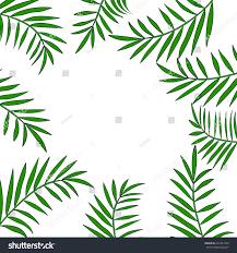 palm tree leaves frame border tropical stock vector 662044759