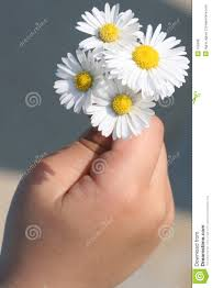 flowers for you stock photo image of tenderness stem 755936