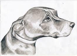animals sarah kirk illustration