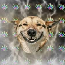 High Dog Meme - stoner dog know your meme