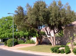 moving to chandler area looking for trees tempe gilbert