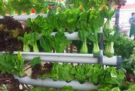 how to make a simple minimalist vertical garden halamanku halamanmu