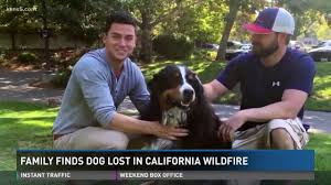 California Wildfire Cat by Family Finds Lost Dog In California Wildfire Youtube