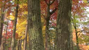 ws of multi colored leaves on various trees stock footage