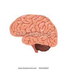 Cartoon Human Anatomy Human Internal Organs Icon Set Vector Stock Vector 590235935