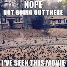 Nope Meme - nope not going out there ive seen this movie meme meme collection