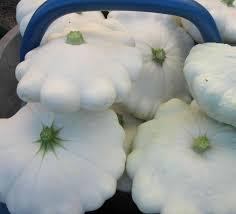 cuisiner un patisson blanc comment cuisiner le pâtisson l arche de gaïa