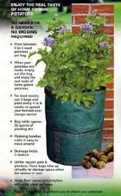 Patio Potato Planters How To Grow Potatoes And Why
