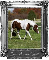 zips heaven sent apha stallion horses i like pinterest