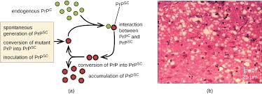Viroid Diseases In Plants - viroids virusoids and prions microbiology