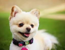 Canine Creature Comforts Blog Dog Trainer Jacksonville U2014 Creature Comfort Pet Services