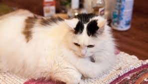 Remove Cat Urine From Sofa How To Clean Cat Urine With A Baking Soda Dish Soap U0026 Peroxide