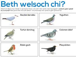 primary welsh resources basics