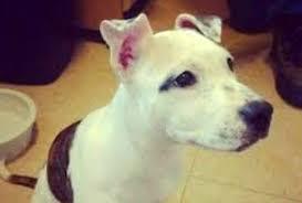 bartender resume template australian terrier club of america puppy doe s abuser faces 55 years in prison held on 500 000 bail