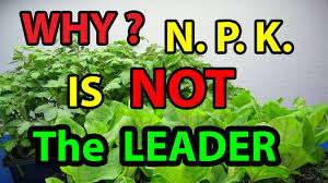 Gardening For Beginners Vegetables by Why N P K Is Not Leader In No Till Homesteading Gardening