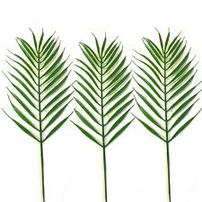 palm leaves for palm sunday popular palm sunday tropical palm cycas leaves choose type