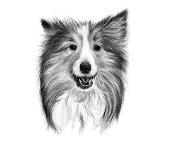 tips for drawing realistic pet portraits u2013 lori mcnee art u0026 fine