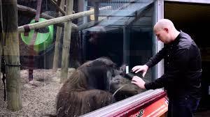 bentley orangutan guy performs magic trick for orangutan youtube