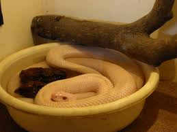 reptiles backyard zoologist page 2