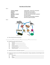 food webs and food chains worksheet by alexjfirth teaching