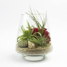 Cute Plant by Modern Home Interior Design Air Plant Terrarium Air Plants
