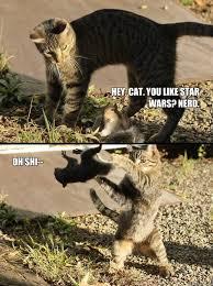Star Wars Cat Meme - hey cat you like star wars nerd oh shi annoying squirrel