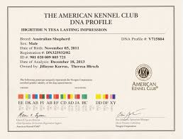 australian shepherd kennel club hightide kennel u2022 jackson u0027s certificates