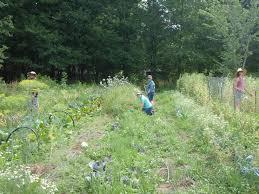news u0026 updates earthly delights farm a vegephile u0027s dream