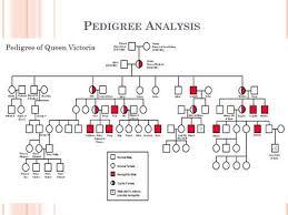 pedigree analysis 2005 lee bardwell ppt download