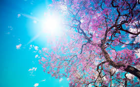 dual screen treecool cherry peace landscape fresh mac