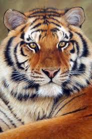 25 beautiful realistic animal drawings lion