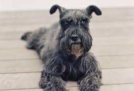 the top 10 smartest dog breeds
