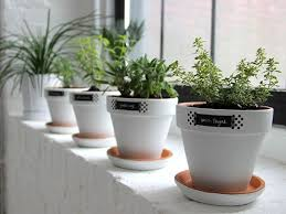 windowsill herb garden gardening ideas