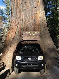 Chandelier Drive Through Tree Day 3 Northern California To Oregon U2013 Say Yes To Happy