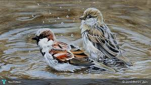playful sparrows water u0026 poster colours touchtalent for