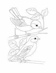 bird kids coloring page free download