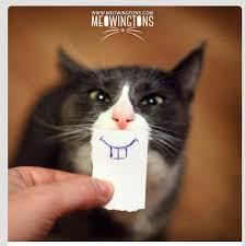 Lol Cat Meme - see moar at www meowingtons com lolcat cat meme cute cat