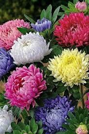648 best flower gardening images on pinterest flower gardening