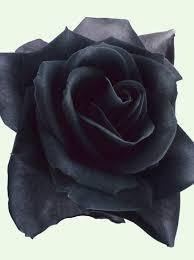 Black Rose Flower Collection Of 25 Black Rose Tattoo