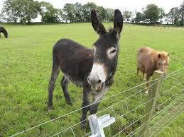 donkey animation movie shrek