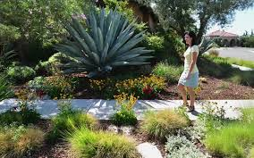 create a drought tolerant lawn free yard the fresno bee