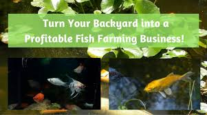 Backyard Fish Farming Tilapia Turn Your Backyard Into A Profitable Fish Farming Business