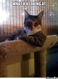 Mean Cat Memes - mean cat by tofy meme center