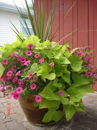 container gardening ideas e z vegetables herbs and flowers 30