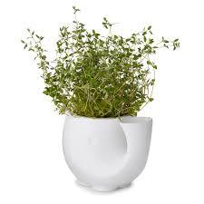 self watering eleplanter growing herbs indoor garden