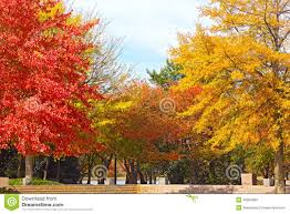 colorful fall foliage deciduous trees water stock