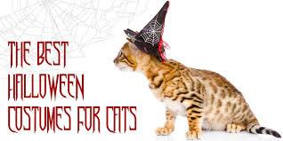 Cat Halloween Costumes Cats Halloween Costumes Cats